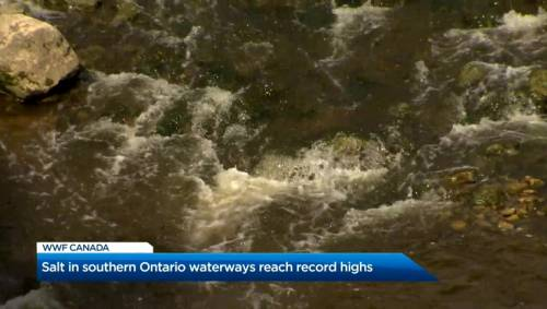 Salt in Southern Ontario waterways reaches record high