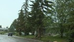Lightning strikes tree in northeast Calgary