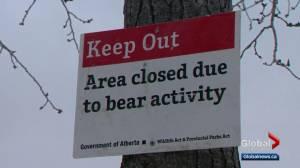 Black bear sighting closes part of Calgary's Fish Creek Park