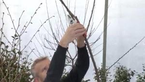 GardenWorks: Tree Trimming Tips