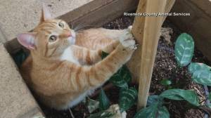 South Carolina cat missing for over 1 year found in California