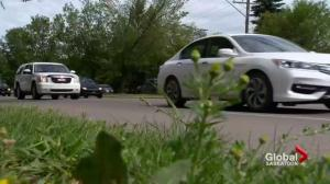 Medical marijuana users fear impaired driving laws once cannabis is legal