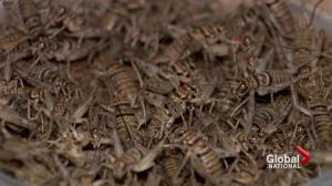 Ontario company putting insects on the table