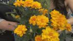 Gardenworks: Bug repellent plants