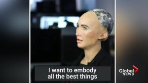 Is this the year of the robot?