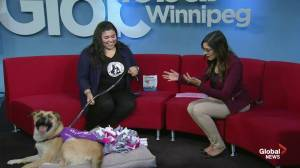 Adopt a Pal: Winnipeg Humane Society