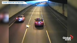 Dog jumps out of car window in Australia tunnel