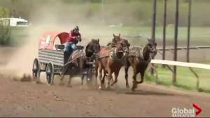 World Professional Chuckwagon Racing in Saskatoon this weekend