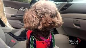 Owner pleads for stolen dog's return