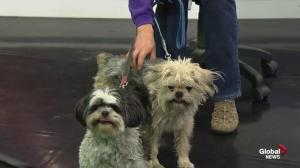 Edmonton Humane Society: Izzy & Zeva