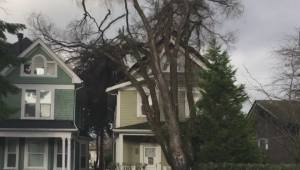 Dramatic video shows tree falling on East Van home