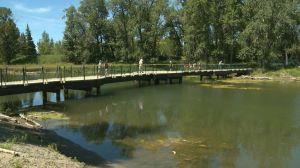 Calgary's Inglewood Bird Sanctuary reopens to public