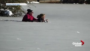 Dog rescued after falling through ice in West Vancouver duck pond
