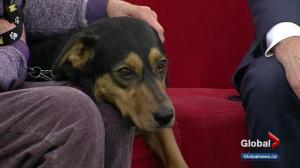 Cochrane Humane Society: Oscar