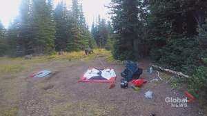 Alberta man captures video of close encounter with grizzly bear, cubs in Kananaskis