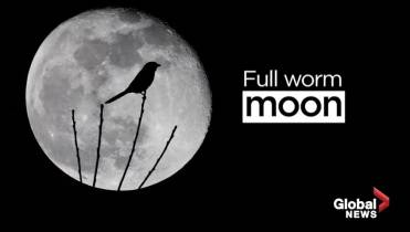 A 'full worm super moon' will rise on the first day of
