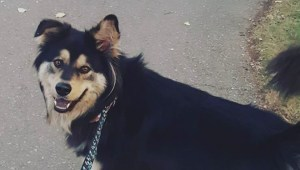Calgary family's SUV stolen with dog inside