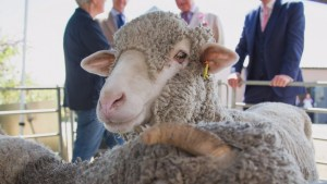 The many benefits of wool