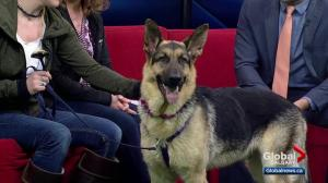 Pet of the Week: Rocky