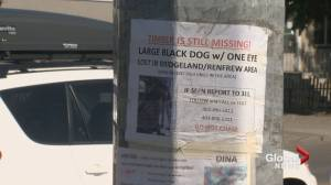 Confusion over Calgary missing dog posters