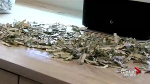 What would you do if your toddler shredded $1000?