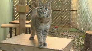 Hope for Wildlife set for expansion with new building