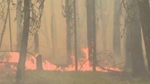 B.C. wildfires: Winds could fuel blazes near Williams Lake