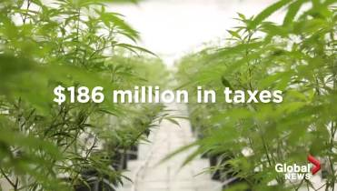 Cannabis taxes brought in $186 million in five and a half