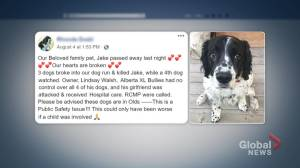 Dog killed in own backyard by pack of dogs in Town of Olds