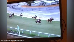 'There's gunfire at the track': Shots fired during horse racing event at Del Mar racetrack in California