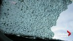 Transport Canada reveals number of complaints regarding shattered sunroofs on vehicles