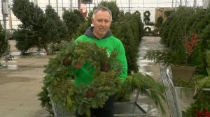Using live greens for Christmas decorations