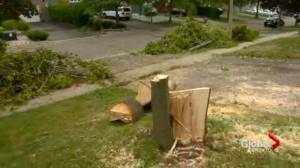 'There was a ton of damage': Oshawa resident cleans up debris from Saturday's downburst
