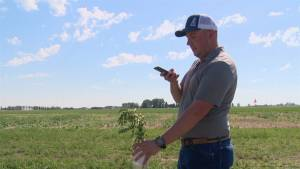 Weed scouting app showcased at Farming Smarter event