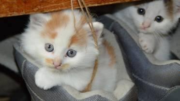 Cuddling kittens could make you very sick, scientists say