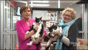 Global Peterborough's Shelter Pet Project – Joey and Michael