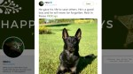 Police K-9 killed, suspect injured in Florida mall shooting on Christmas eve
