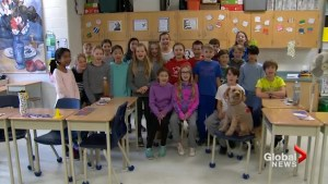 Storm the weather dog bloppers at John Wanless school