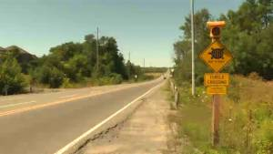 Kingston City council bans passing on 1km portion of highway 2 to protect turtles (01:21)