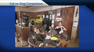 Facebook study examines personality traits of cat vs. dog people (03:30)