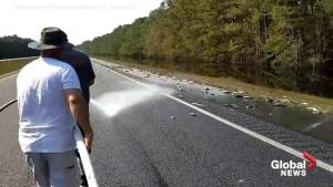North Carolina firefighters use hoses to dispose of fish following Hurricane Florence