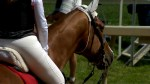 2019 Preakness Stakes gets set to run Saturday