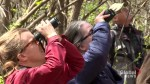 Mother's Day birdwatching at the Saint-Jacques escarpment