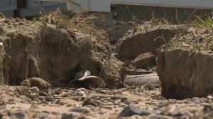 Pilot Butte residents plan cease and desist order over backyard drainage issue