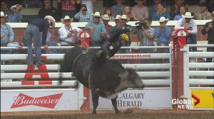 Montana teenager bucks trend winning bull riding pool in first Calgary Stampede