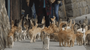 Japanese island overrun with cats