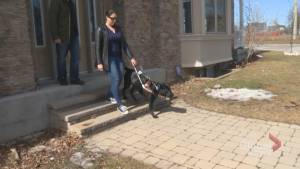 One year after Global News series on guide dogs, problems with access and enforcement remain (03:15)