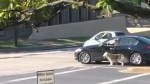 Dog caught on camera in Austin being walked by driver in moving vehicle