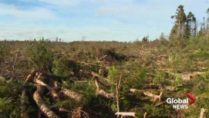 150,000 hectares of land to be added to Crown conservation areas in New Brunswick