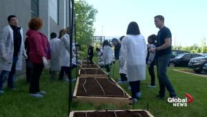West Island company creating urban garden for local food bank